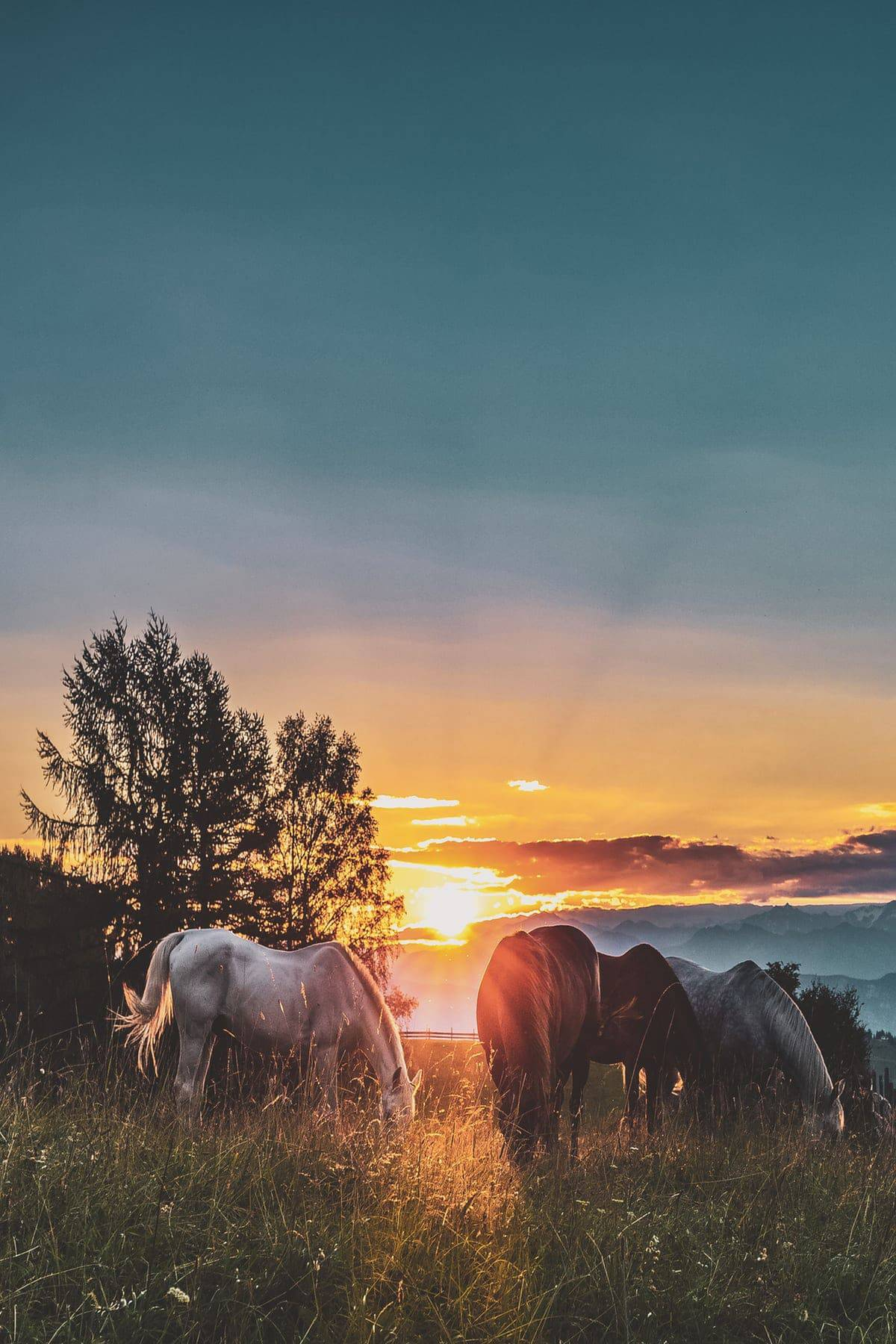 Why Horses Are A Perfect Companion
