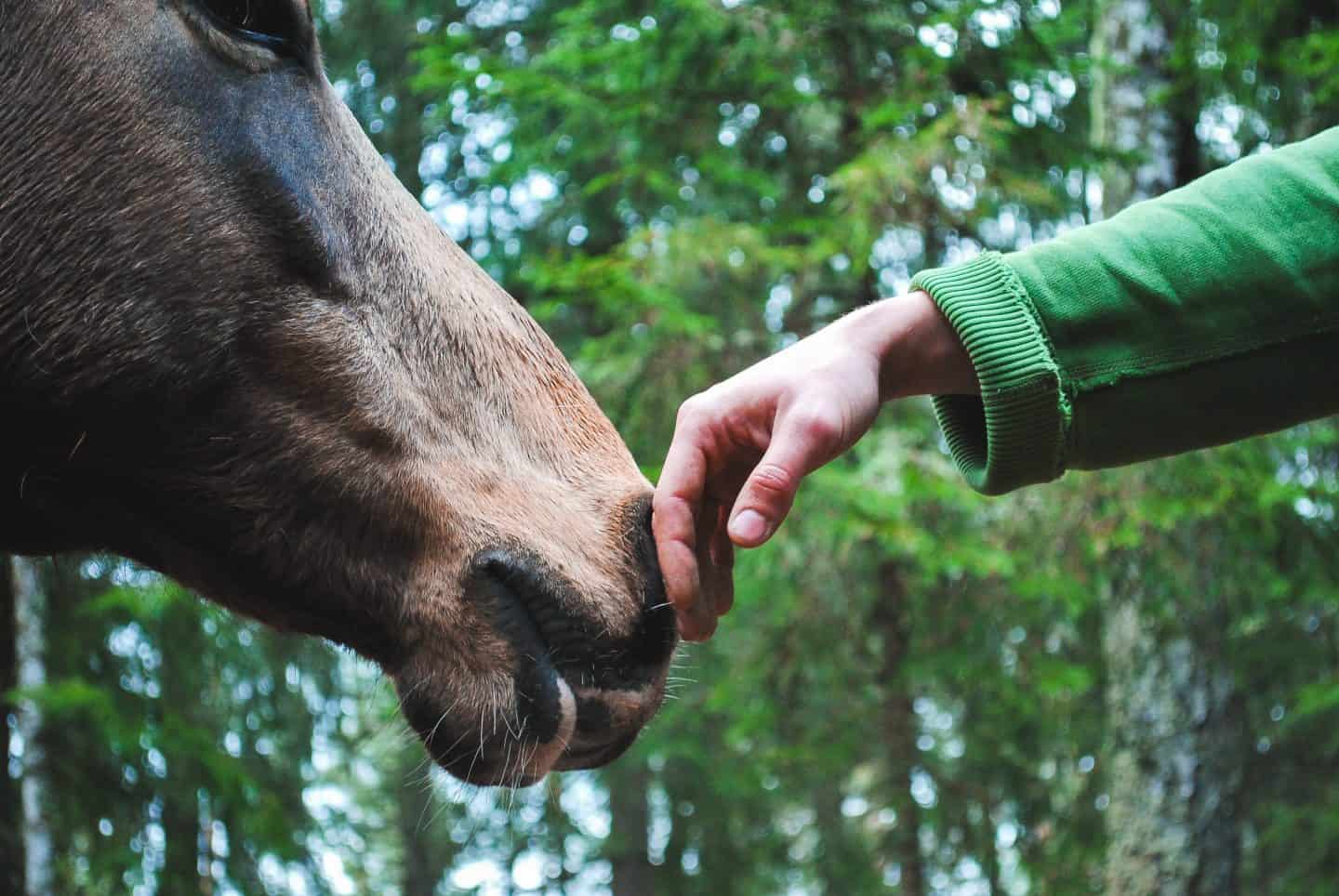 4 Top Gifts For Horse Lovers