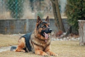 5 Simple Tips For Raising A Healthy Dog